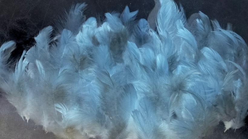 feathersfluffyblue